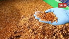 نوع جديد من شطائر البرجر الحشري يستهوي البعض في ألمانيا