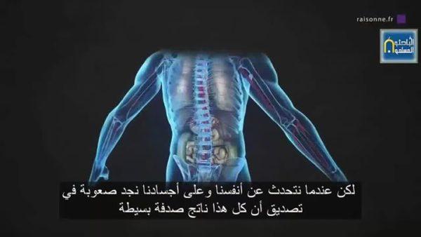 #منكوشات_تطورية :  تفكر 7 – إبداع الخالق في جسم الإنسان يهدم خرافة التطور.
